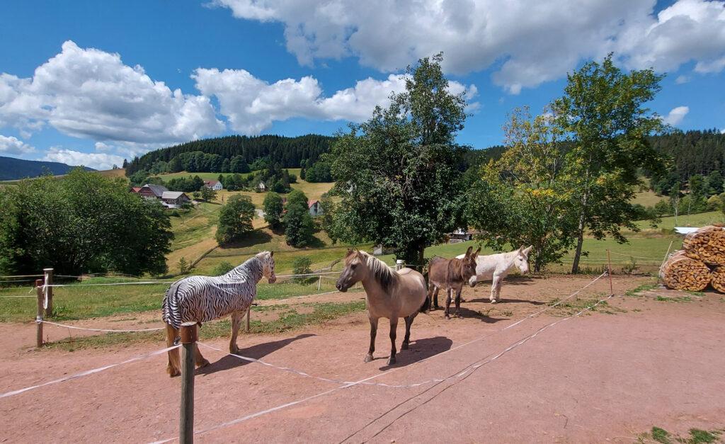 Pferde-Esel